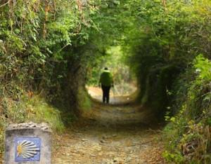 Camino Walker & marker