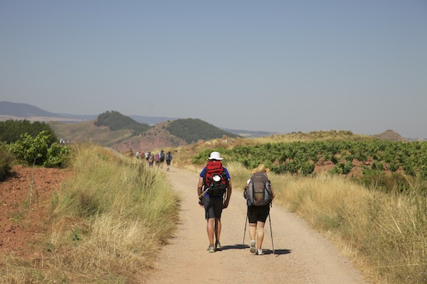Walkers passing Vineyards near Logrono, Stage 7